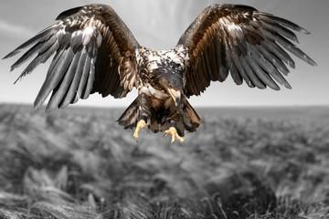 Hawk, Bird, Eagle. Wall mural