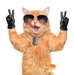 cat with peace fingers in black leather