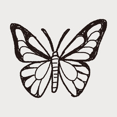 butterfly doodle