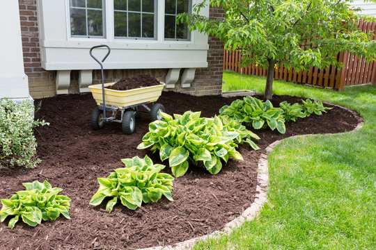 Garden maintenance in spring doing the mulching