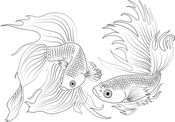 vector black and white aquarium fish