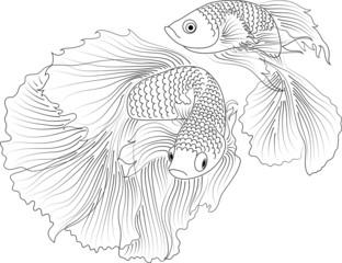 vector black and white aquarium fish