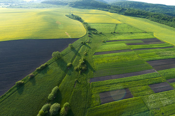 Photo sur Toile Vue aerienne Aerial view on yellow fields