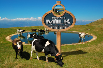 Fresh Milk - Wooden Sign with Grazing Cows