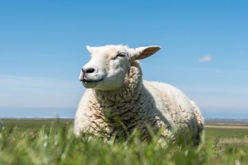 sheep on meadow in blue sky