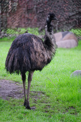 The image of an ostrich