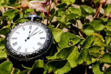 昼顔の葉と懐中時計