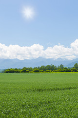 北海道 農業風景 Agricultural landscape Hokkaido Japan