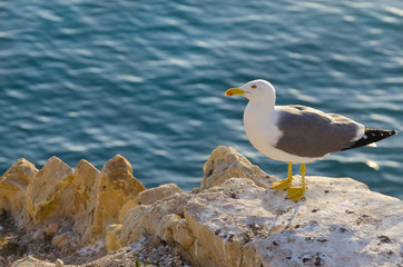 Seagull in a rock in front of a turquoise Mediterranean sea