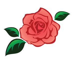 Pink rose with leaves illustration