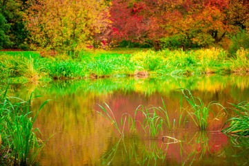 beautiful and calm forest lake in autumn