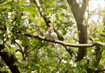 Small Bird on Branch