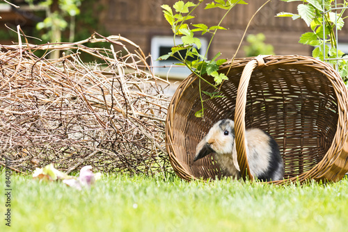 Kaninchen Im Garten Stock Photo And Royalty Free Images On Fotolia