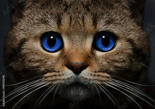 кошка язык глаза сердечки  № 2824828 без смс