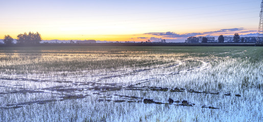 Sunrise on a paddy field, springtime. Color image