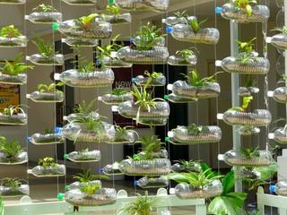 bilder und videos suchen pet flaschen mit pflanzen. Black Bedroom Furniture Sets. Home Design Ideas