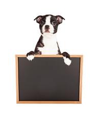 Fototapete - Boston Terrier Puppy Holding Blank Chalkboard