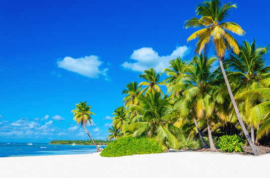 Tropical beach with palm tree entering the ocean