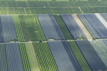 Apfelproduktion in der Landwirtschaft als Monokultur