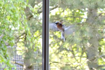 Vogel vor dem Fenster Wall mural