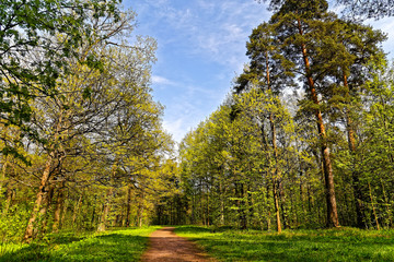 Clear day in wonderfully beautiful wood. Nature of Russia. Lenin