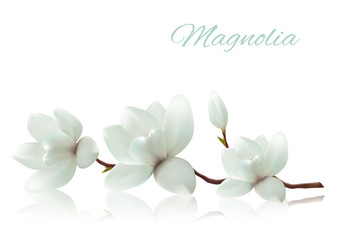 Fototapete - Flower background with blossom branch of white magnolia. Vector