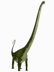 Mamenchisaurus hochuanensis Dinosaur