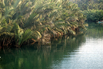 Mangrove forest in the river image