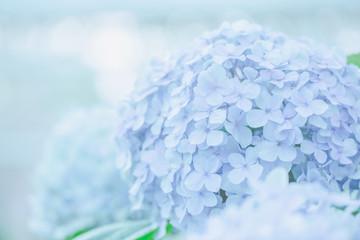 Zelfklevend Fotobehang Hydrangea hydrangea flower