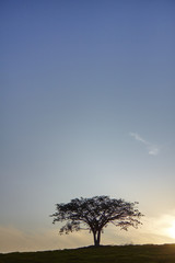 Sunset lonely silhouette tree