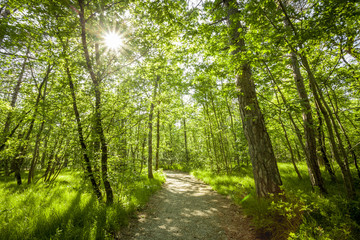 Path in beautiful green forest in summer