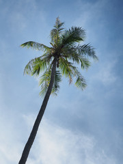 Coconut trees on the bright sky day.