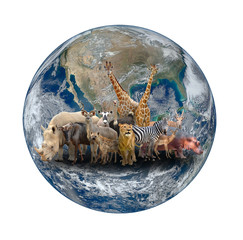 Wall Mural - group of africa animal with planet earth