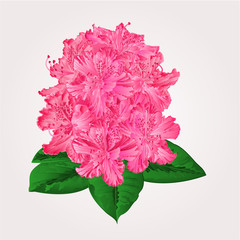 Rhododendron in bloom vector