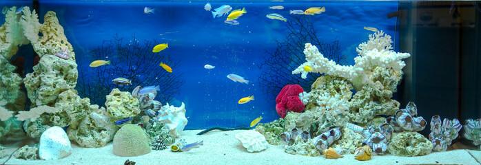 Large rectangular aquarium with tropical cichlids fish