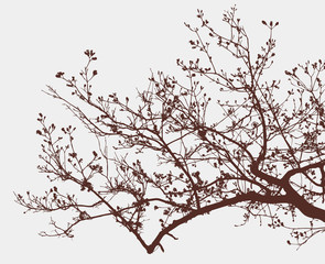 branch of a blooming tree