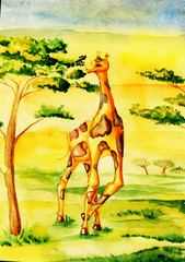 Giraffe in the savannah, eats tree
