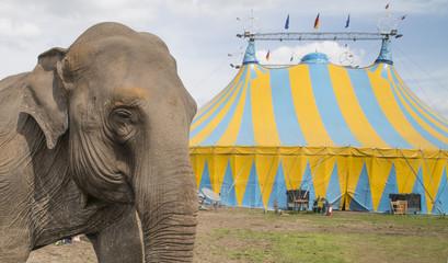 elephant outside circus