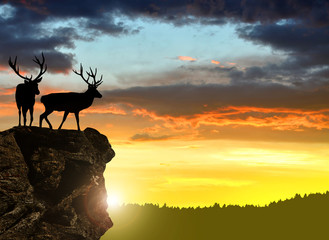 Deers silhouettes in the sunset
