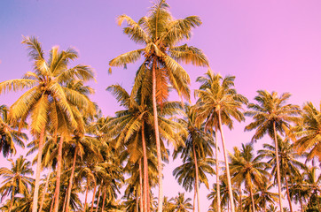 Palm trees on a background of purple sky