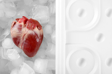 Heart organ in fridge close up