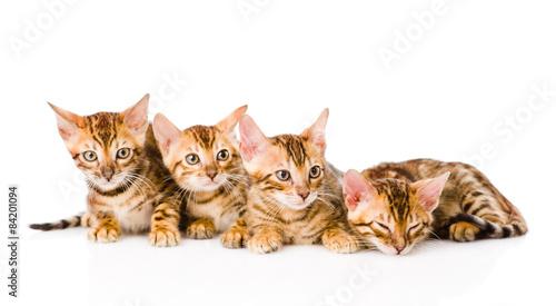 kitten grooming each other