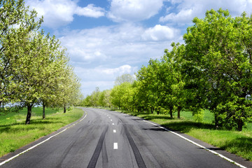 Asphalt road through the green field in spring day