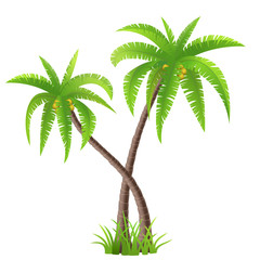 Two coconut palm trees isolated on white, vector illustration