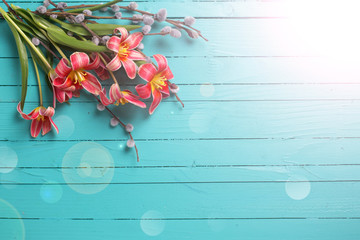 Background with fresh tulips