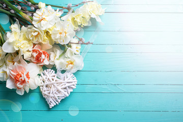 Background with fresh daffodils and willow flowers and decorativ