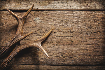 Photo sur Aluminium Chasse Deer Antlers on Wooden Surface