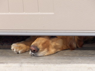 Dog's Nose Under Garage Door