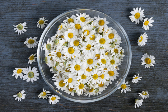 Chamomile flowers in bowl