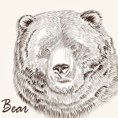 Animal hand drawn portrait of bear